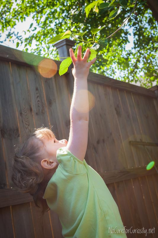 The little girl stretches up to help her dad shake the branches of the mulberry tree.