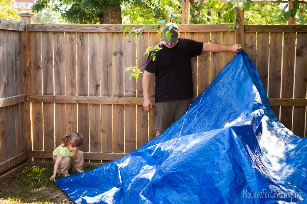 We spread a tarp on the ground to catch the mulberries as they fell.