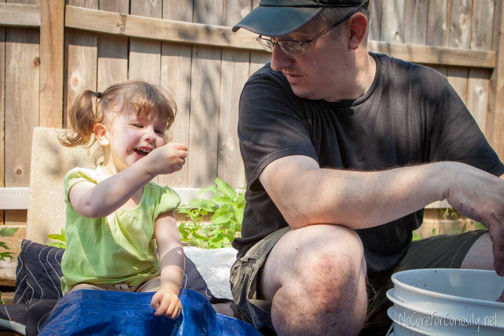 The little girl and her dad sort berries together.